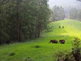 Mesmerizing Munnar tour package