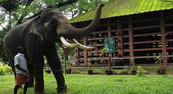elephant-training